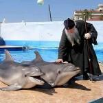 batuska_delfin